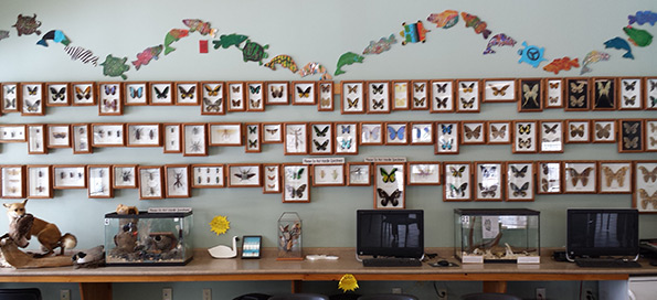 Onondaga Farms framed insects including spiders, beetles and butterflies Tim Horton Children's Foundation