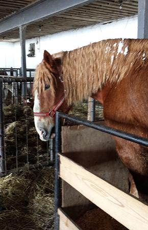 Onondaga farm barn horse in stall Tim Horton Children's Foundation